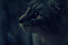 Warrior-Dawnfall-She-cat