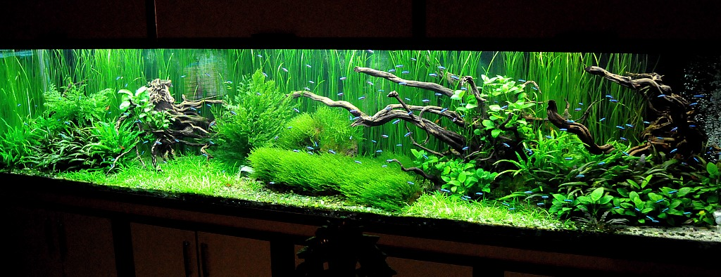 photosynthèse des plantes aquatiques