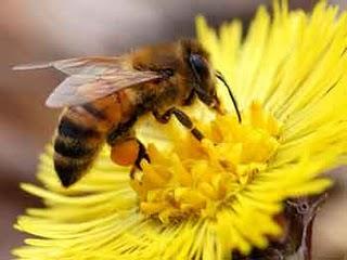 5 Manfaat Propolis, Getah Lebah yang Penuh Khasiat (Tidak Kalah dari Madu!)