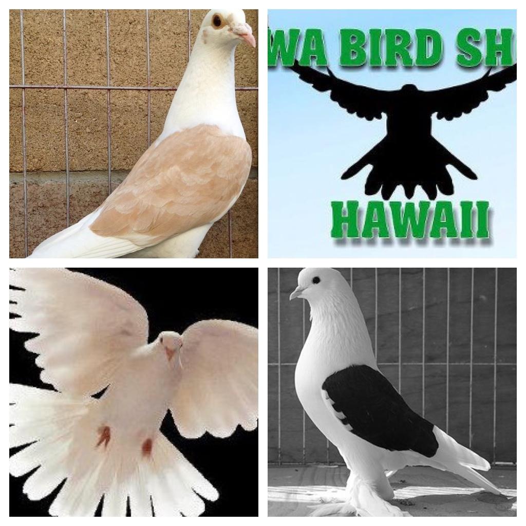 My favorite birds for Waimanalo feed supply