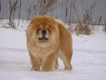 Las Razas de Perros más Caras del Mundo