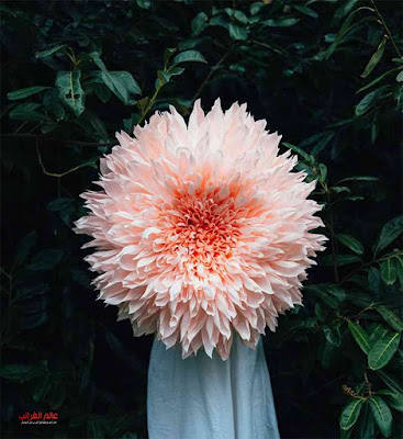 فنانة، أزهار حقيقية، أزهار من الورق