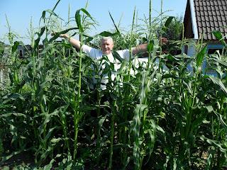 Кукуруза и я
