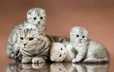 Gatitos muy tiernos - Cute little kittens