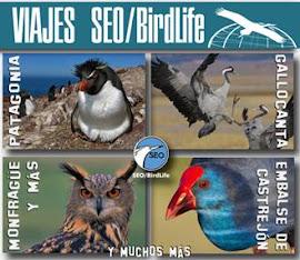 SEO/BirdLife Excursiones y viajes 2013