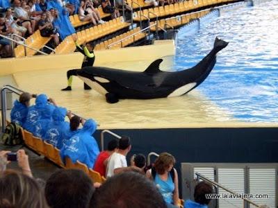 Show Orcas Loro Parque, Tenerife