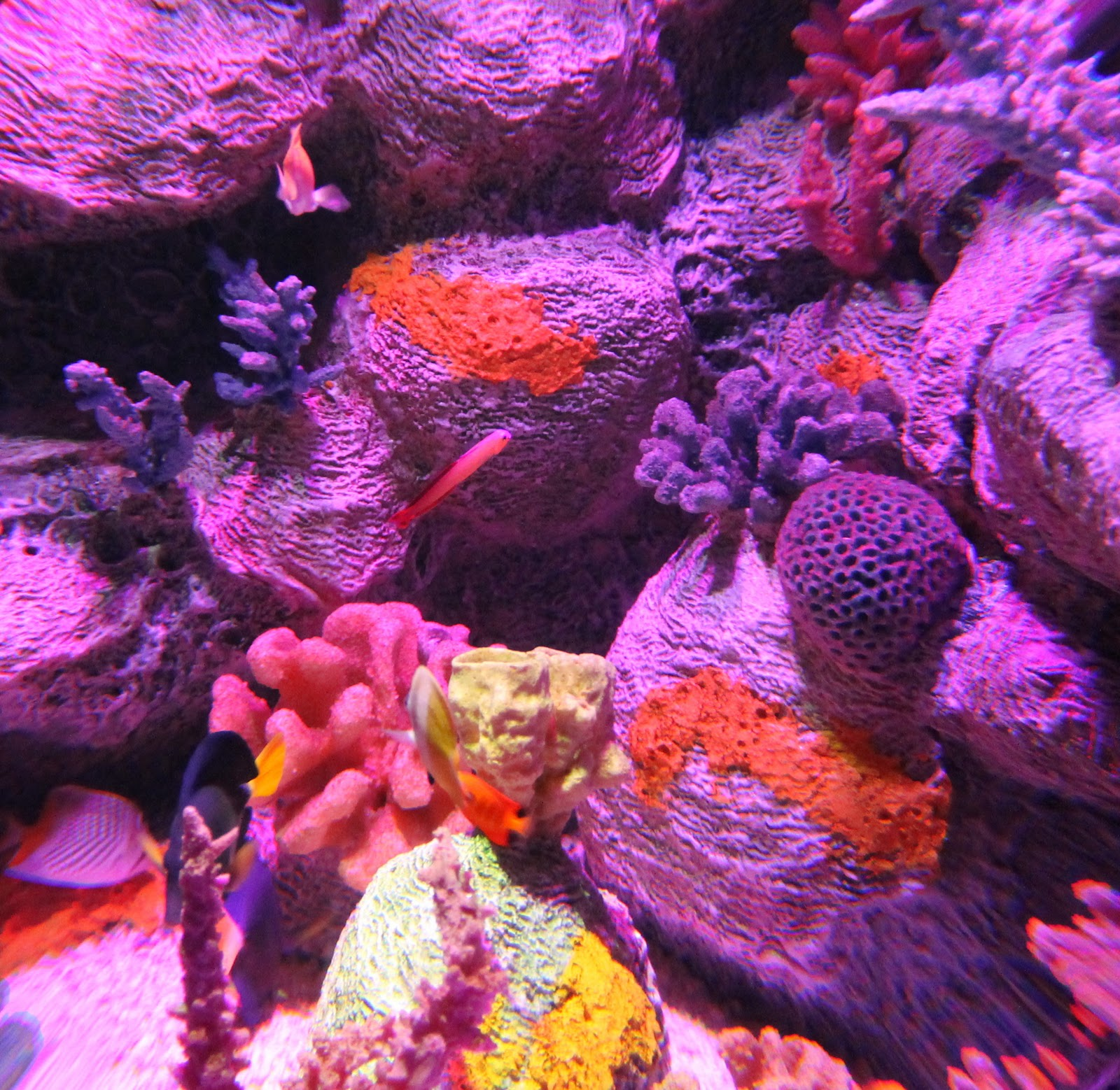 Arizona Sea Life Aquarium East Valley Mom Guide