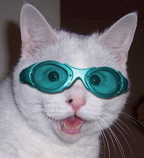 gogglescat.jpg
