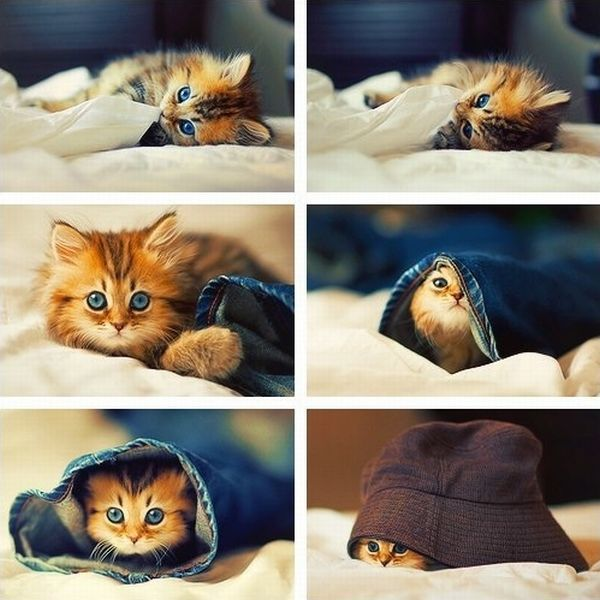 funny cat pictures, cute kitten poses and expressions