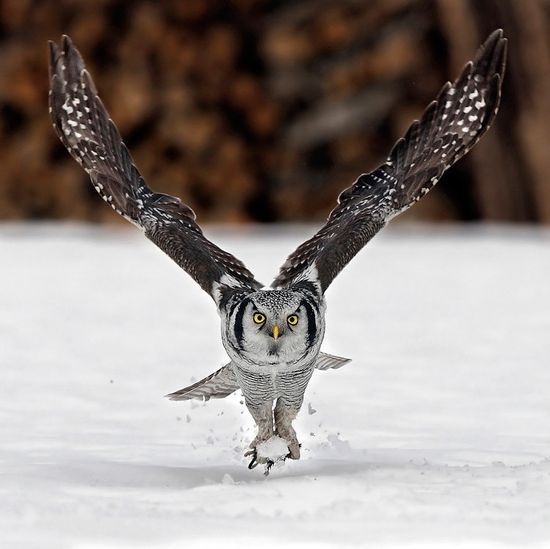 beautiful birds images