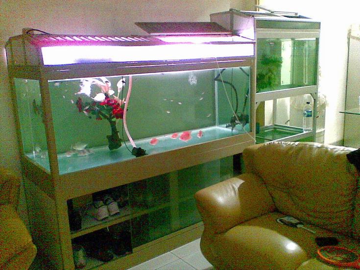 Aquarium air tawar aquascape,- aquarium tanpa kuras?