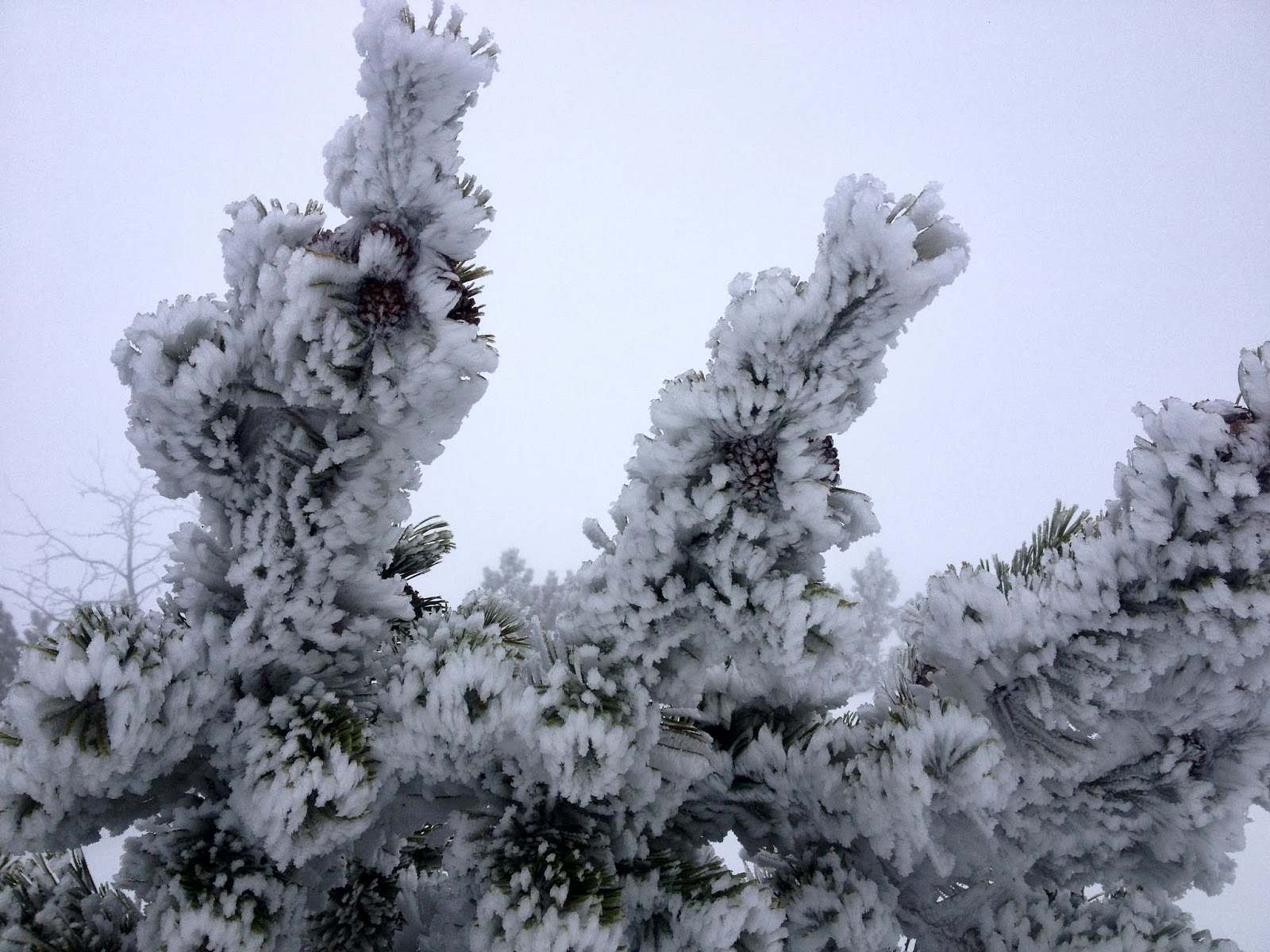 Winterwanderung Hirschberg 02