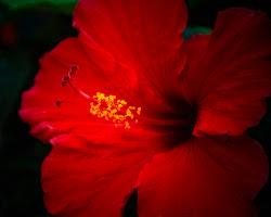 Bunga Semarak Bangsa