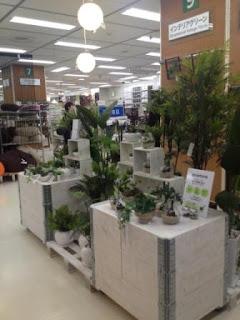 東急ハンズ新宿店 グリーンパーク 観葉植物
