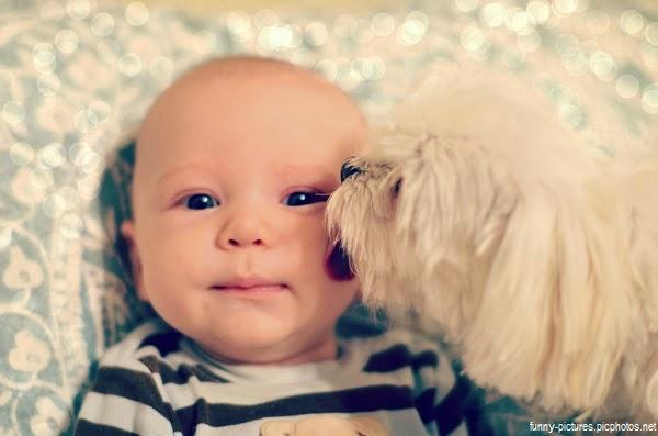 Image bébé  garçon avec son chat
