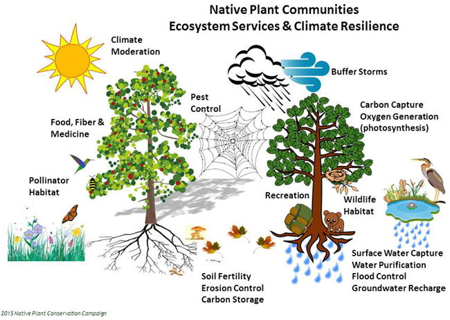 Florida Native Plant Society Blog: The Native Plant ...
