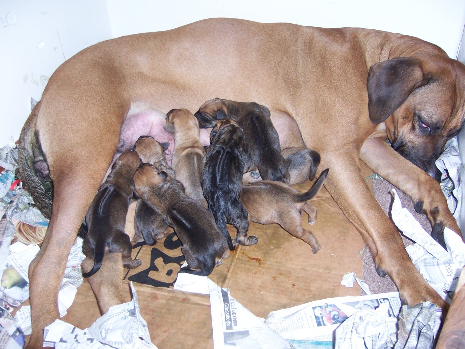 What Is A Good Dog Food For Pregnant Dogs