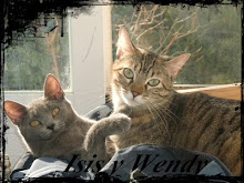 MIS GATAS: WENDY E ISIS