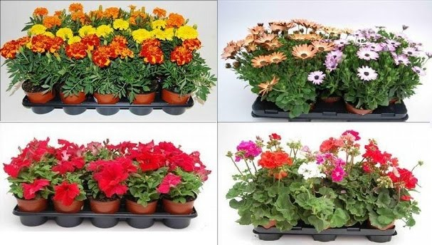 Flores manolita jardineras para tu balc n for Adornos para plantas con llantas