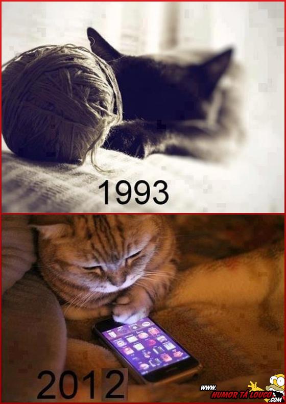 Esses gatos de hoje em dia...