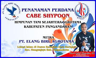 Cabe Shypoon