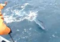 Gila Mancing Double Strike Ikan Marlin Hebohnya Seru