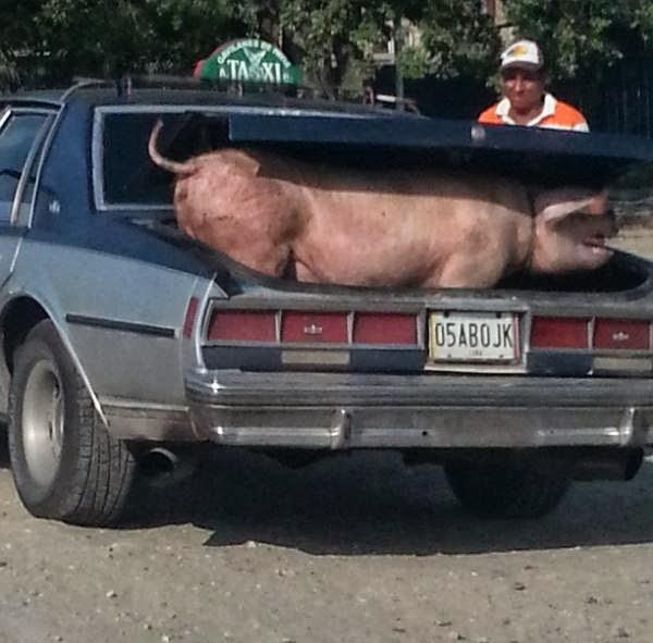 taxi puerco