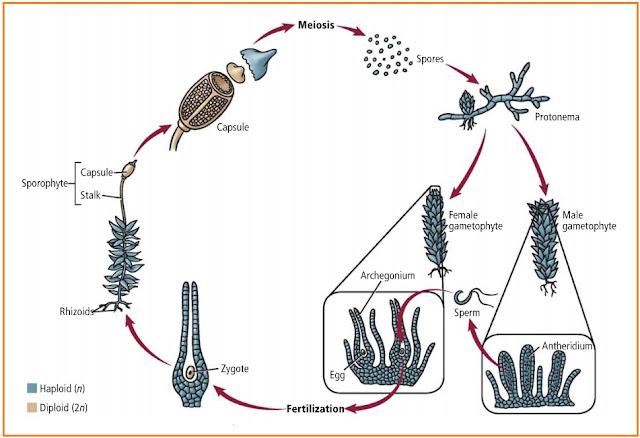 http://4.bp.blogspot.com/-dwRrfhj02Cw/TgbknO3fOeI/AAAAAAAAKXI/lZqJd41rvss/s1600/metagenesis%2Blumut.jpg