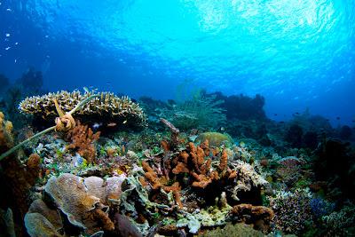 Dalam Laut pulau Alor