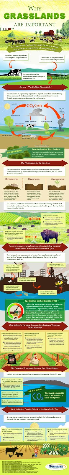 Regenerative Farming Basics