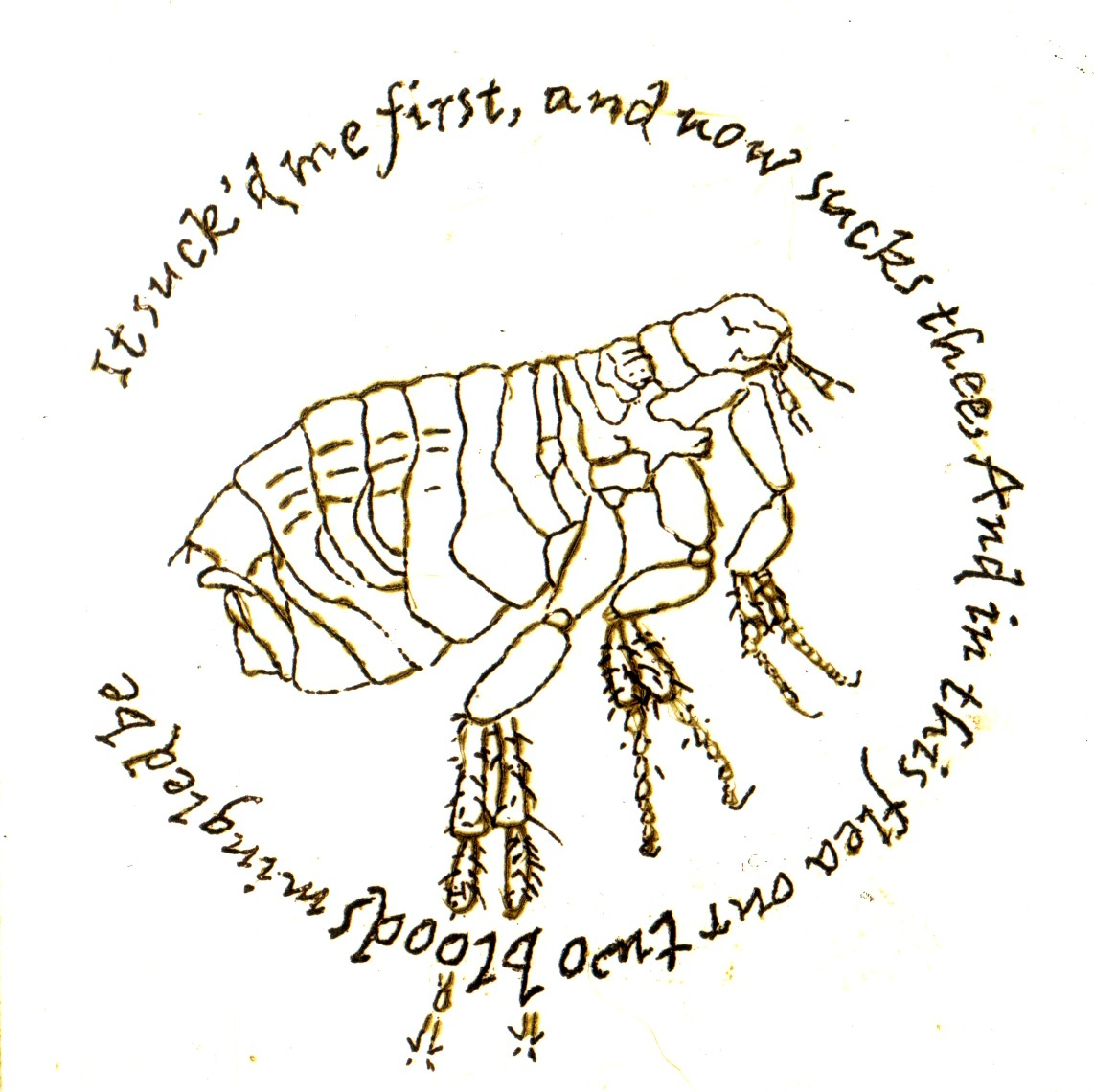 the arrogance in the flea by john donne Donne - meter in `the flea` 6/11/2015 0 comments this flea is you and i, and this our mar-riage bed john donne poetry metaphysical poetry tess of the d'ubervilles thomas hardy english a2 blog archives july 2015 june 2015 create a free website.