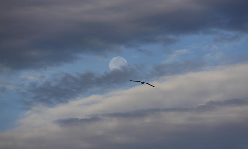 El hacedor de sue os ahora que amanece ora che sale il for Que luna estamos ahora