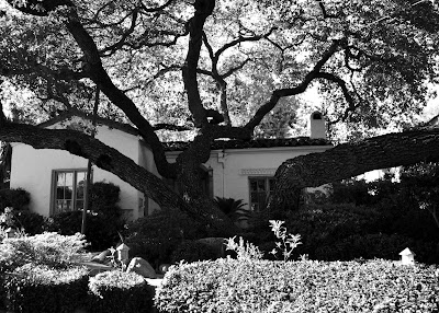 tree%2Bhouse%2B2012 Priorities  photo