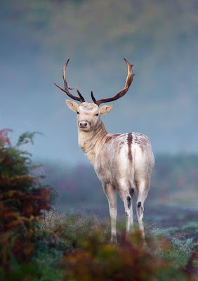 Best Wildlife Pictures2011