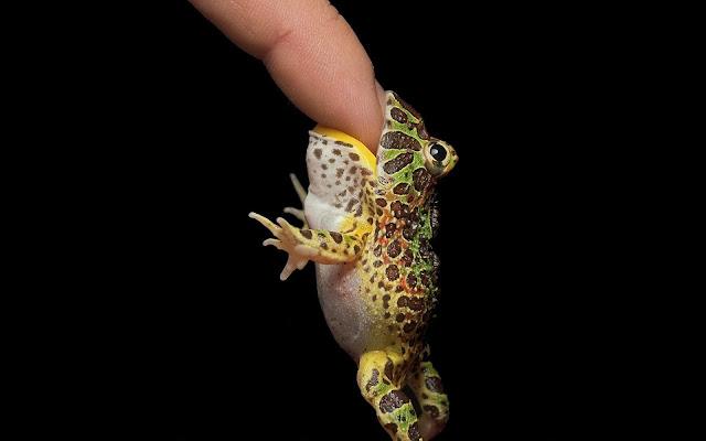 Little Frog Bites Finger