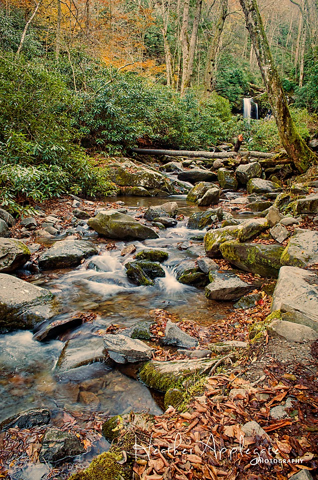 Grotto Falls trail Smoky Mountains Tennessee by Heather Applegate