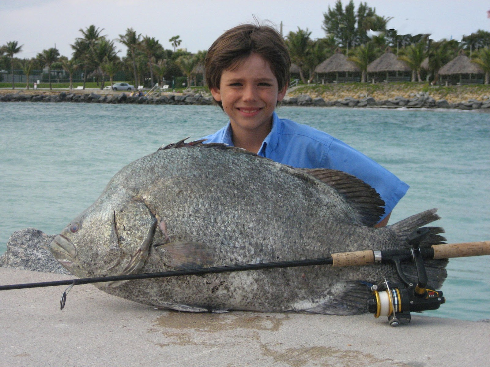 Big Fishes of the World: TRIPLETAIL (Lobotes surinamensis)