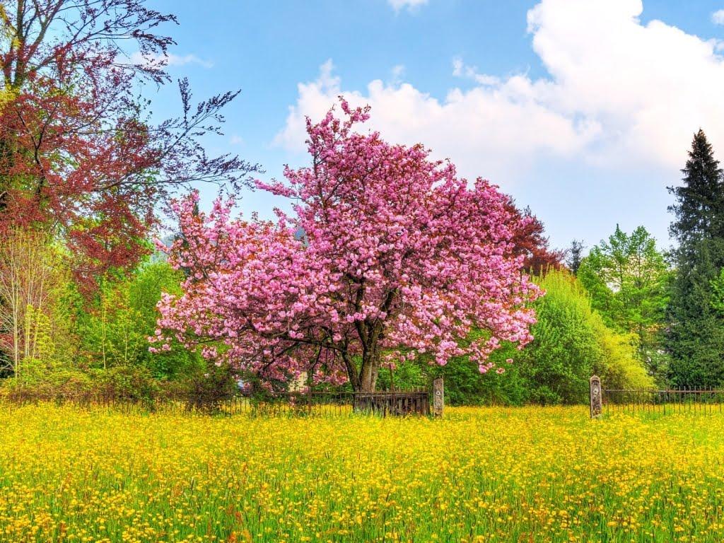 Download besplatne slike i pozadine za desktop: Proljeće, cvijeće ...