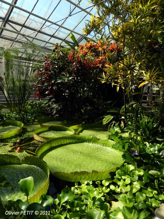 VILLERS-LES-NANCY (54) - Les serres du jardin botanique du Montet-Nénuphars géants d'Amazonie