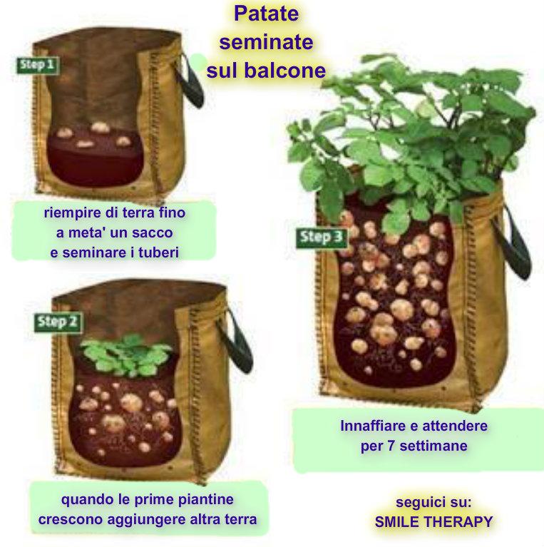 Coltivare le patate nei sacchi in modo naturale for Quando si seminano le patate