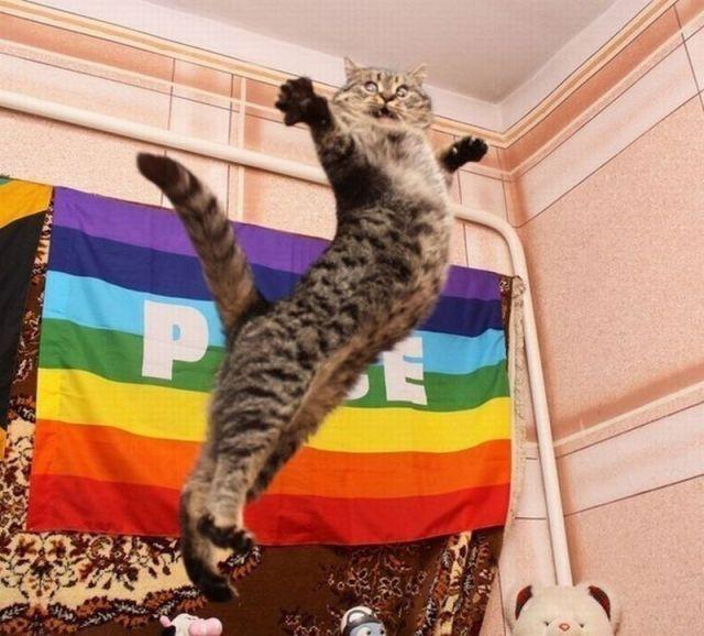 foto lucu
