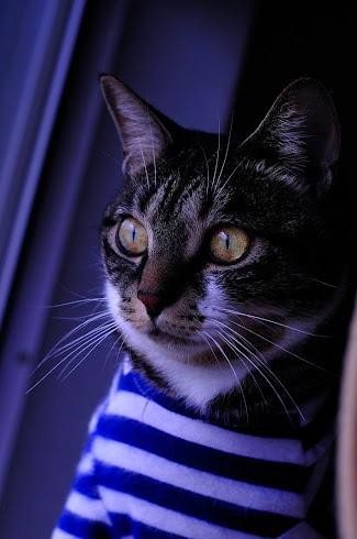 猫のチロル(通称チロちゃん)です。