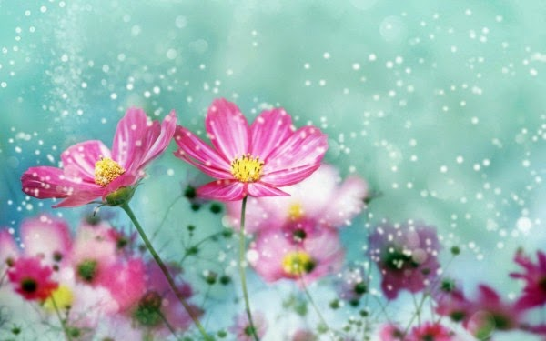 Beautiful Flower Wallpaper