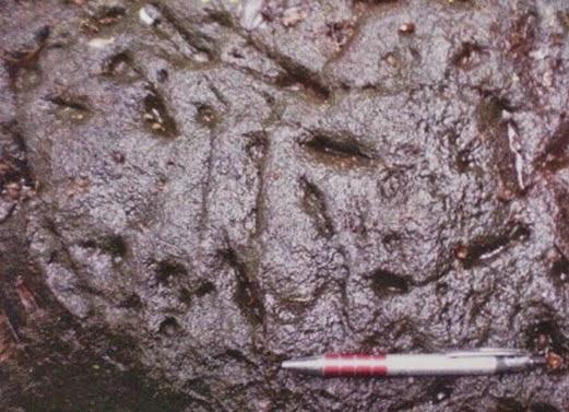 Fosil Dinosaur Iguanodintid dan Sauropod Di Jumpai Di Hulu Terengganu