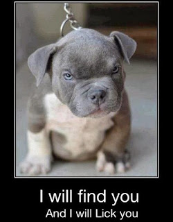 Funny Pictures DP for Bbm and whatsapp i will find you