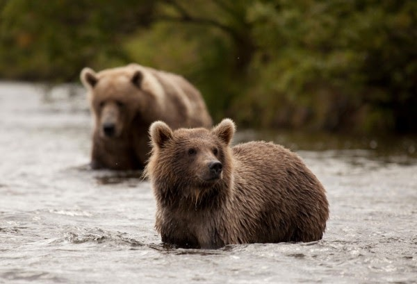 ASK A WILDLIFE BIOLOGIST  Alaska Department of Fish and Game