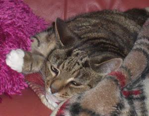 and Mew Cat