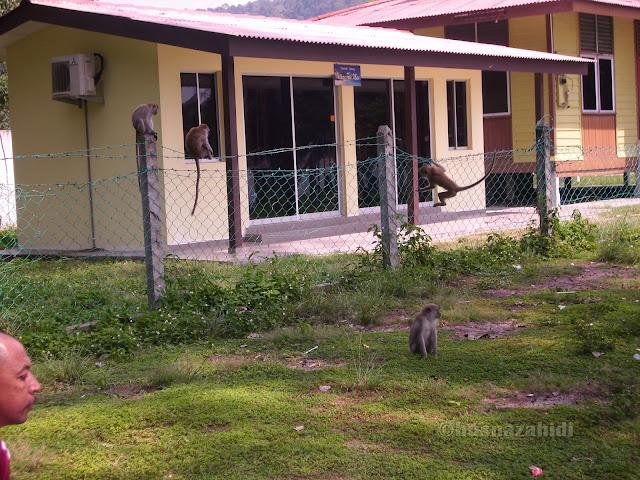 monyet, Teluk Batik, Lumut, Perak