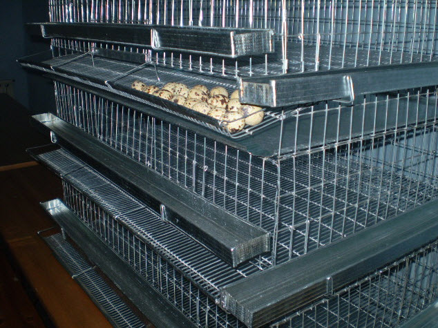 Battery Cage system for egg  Quail Cage Plans
