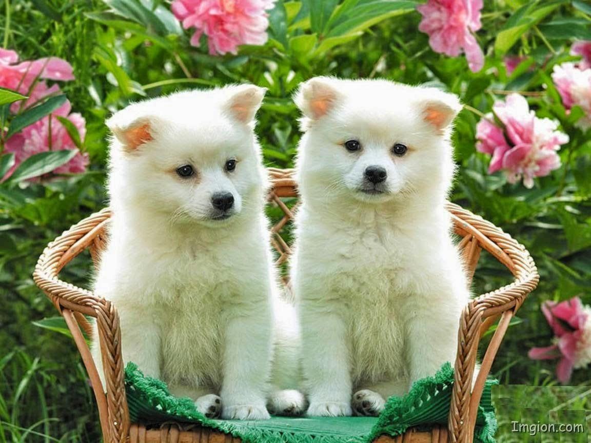 Hình ảnh những chú chó dễ thương nhất thế giới | Ảnh Cún con đáng yêu